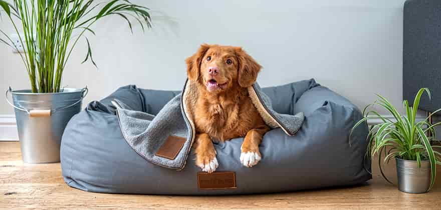 best dog beds in india swag swami article featured image